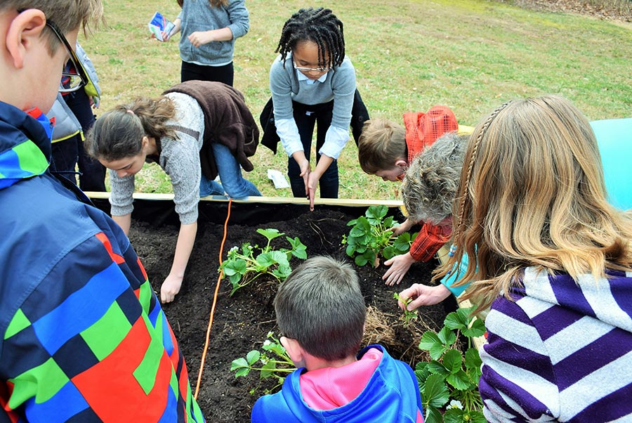 Students Planting in School Garden