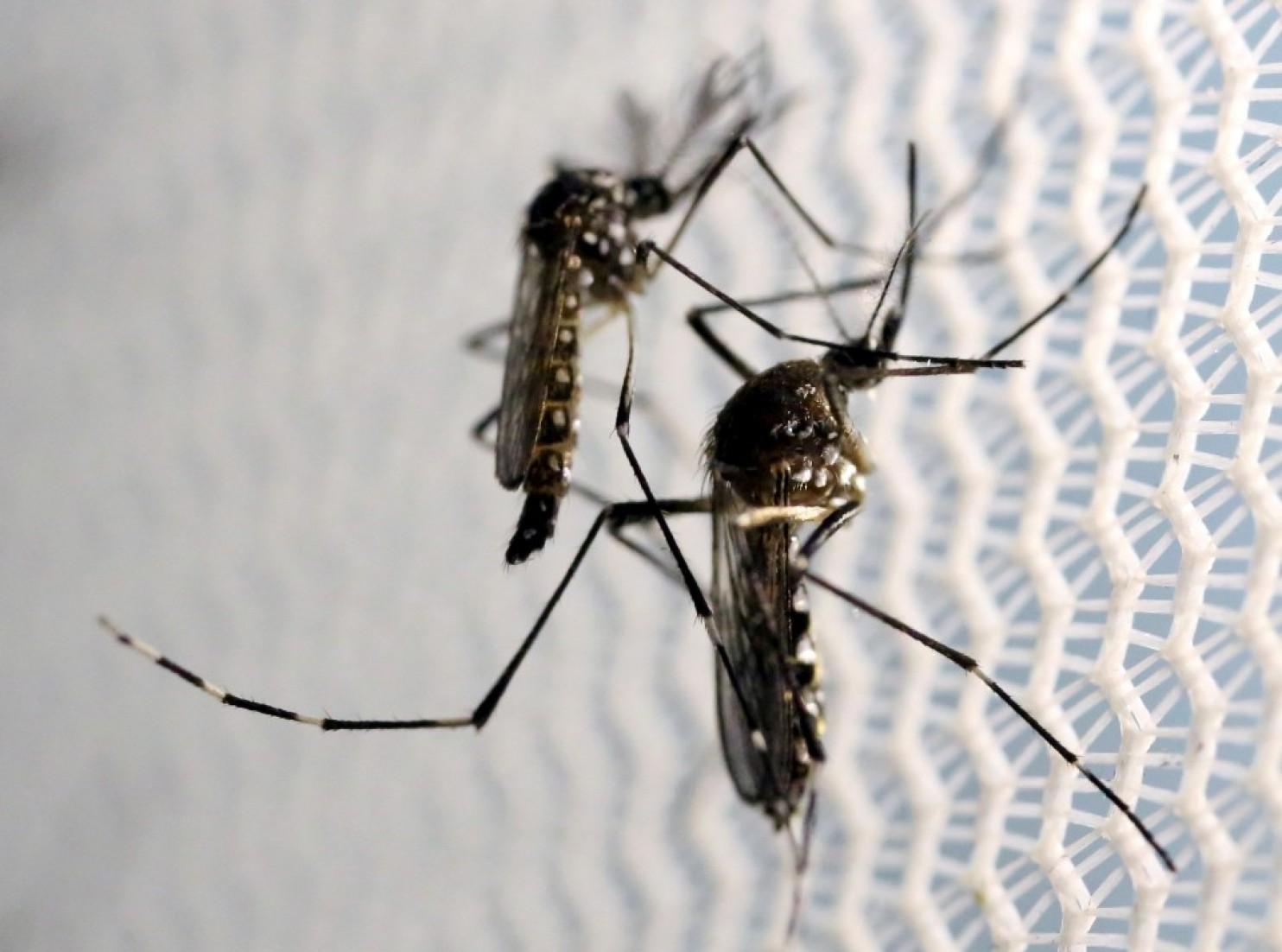 zika virus news and updates mosquito squad